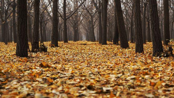 Dlaczego jesienią ludzie chorują częściej?